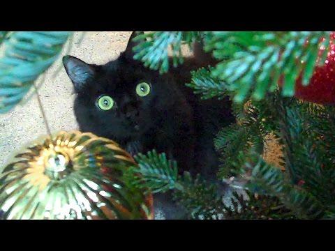 Новогодние коты. Christmas with ShoKo!