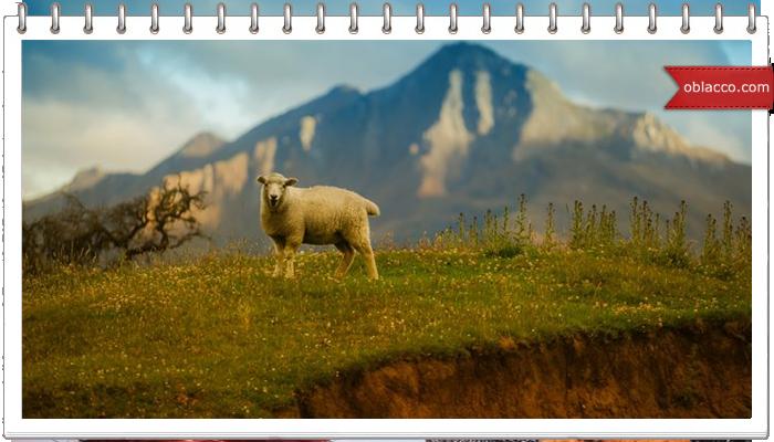 Ключница Овца — символ 2015 года/3518263_ovca (700x400, 405Kb)