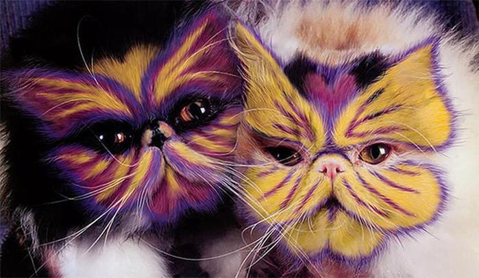 Кэтпейнтинг — форма искусства или издевательство над животными?