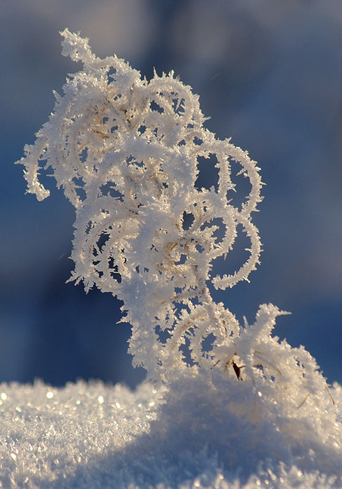 3303834_winter_snow_19 (490x700, 121Kb)
