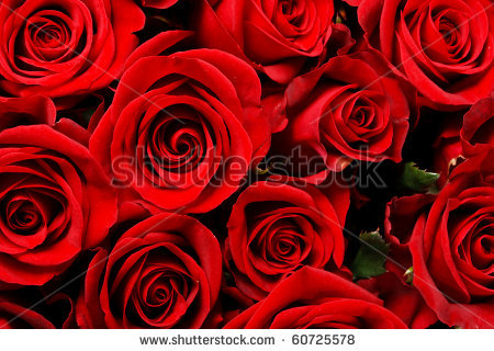 stock-photo-beautiful-flowers-60725578 (450x320, 192Kb)