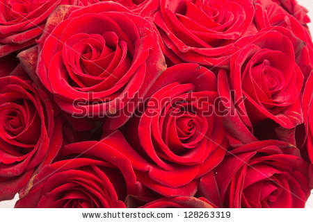 stock-photo-red-rose-red-roses-128263319 (450x320, 175Kb)