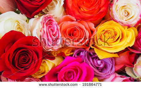 stock-photo-roses-in-a-variety-of-colours-191864771 (450x281, 171Kb)