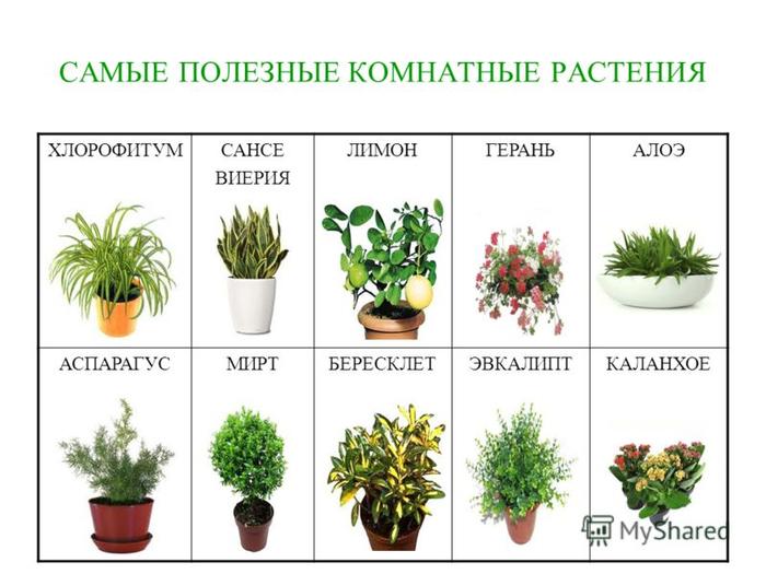 комнатные растения самые распространенные фото и названия
