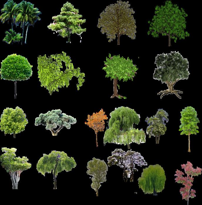 Куст Зеленой Травы, Зеленая Трава, Зеленое Растение - Straw Plant ...   699x687