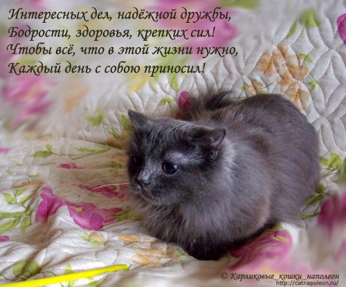 Стихи с днем рождения любительнице кошек