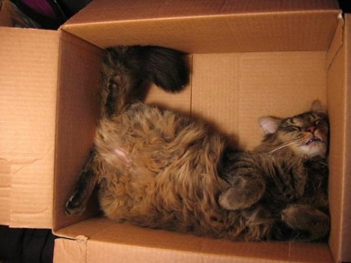 sleepingcats01 (700x525, 280Kb)