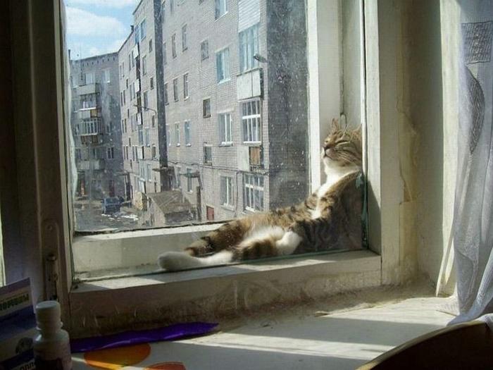 sleepingcats13 (700x525, 322Kb)