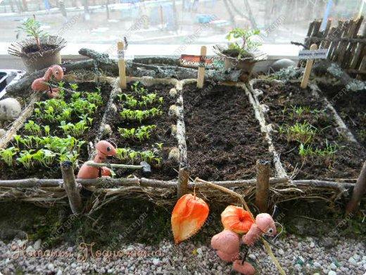 Наталья Подножкина-огород-на подоконнике-муравьишка6 (520x390, 251Kb)