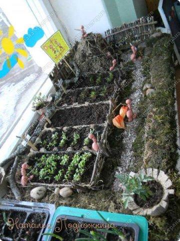 Наталья Подножкина-огород-на подоконнике-муравьишка8 (360x480, 191Kb)