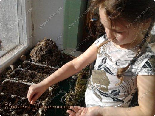 Наталья Подножкина-огород-на подоконнике-муравьишка15 (520x390, 179Kb)