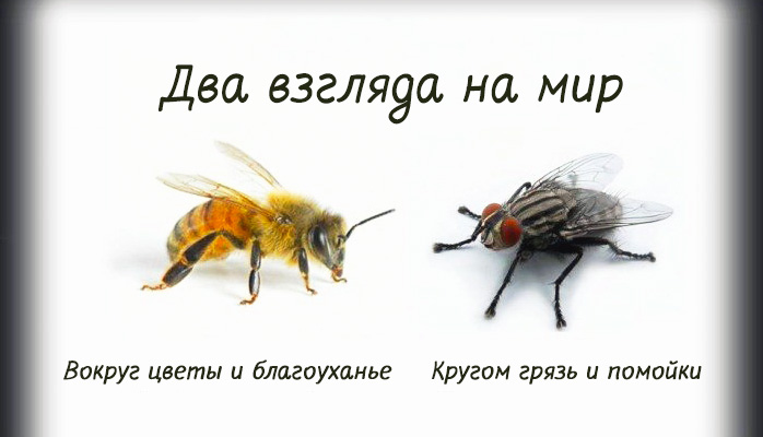 4803300_beefly (698x400, 56Kb)