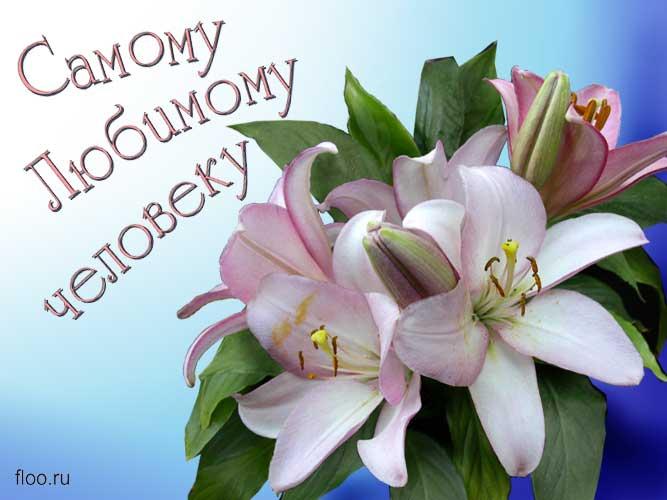 поздравления для дочки лилиями виду напоминает