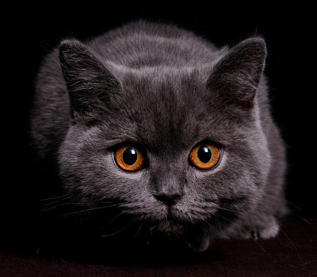 Картинки прикольные, открытки привет коты