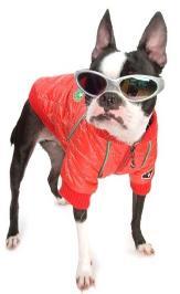 как сделать из своей куртки куртку для собаки.