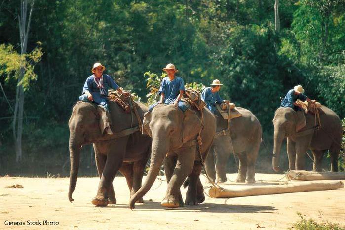 В 14-00 ребята в синих футболках постараются оседлать слонов)
