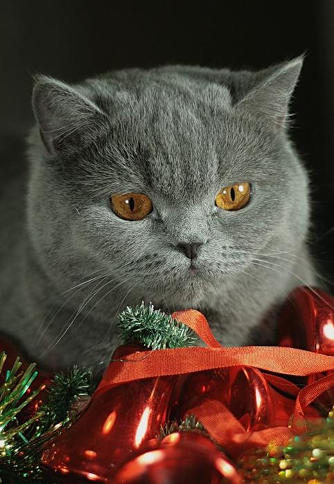 Поздравления от кошки на новый год