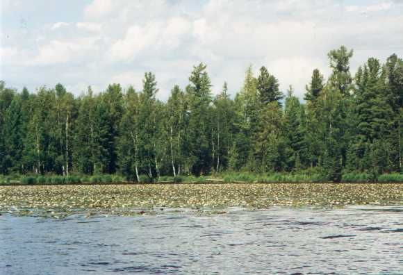 даже чересчур тоджинская котловина фото лес природа сторис инстаграма