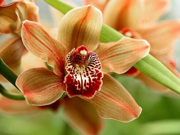 ...Уэльской пройдут красочные выставки орхидей.