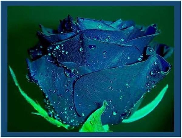 Мне быть не смертной женщиной земной, А синей розой в блёстках звёздной...
