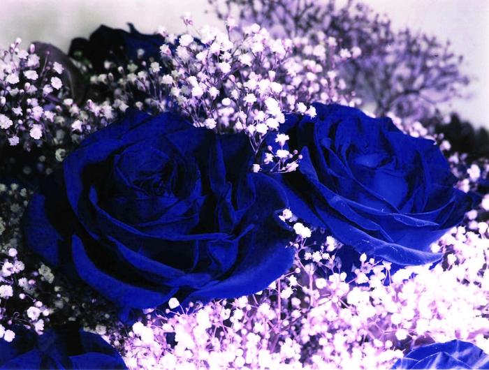 Синие розы ( Ты смеялась надо мной.....я просила на свиданье.