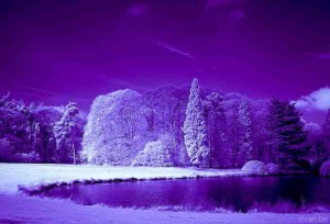 Purple_Snow-300x204 (300x204, 18Kb)