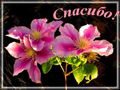 http://img0.liveinternet.ru/images/attach/c/1//50/410/50410806_spasibo3.jpg