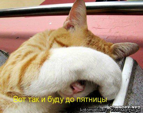 http://img0.liveinternet.ru/images/attach/c/1//57/371/57371901_1270412314_a1.jpg