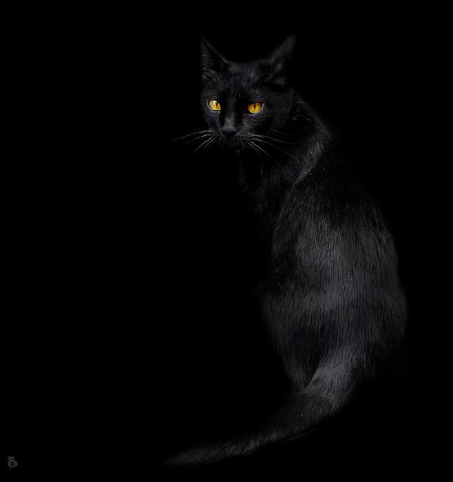Чёрный кот.