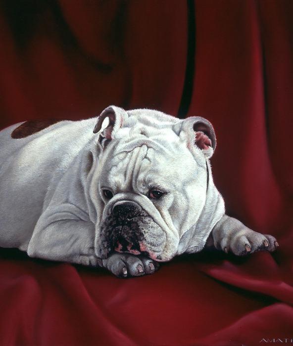 Собачки от художницы Michele Amatrula. (592x699, 85Kb)