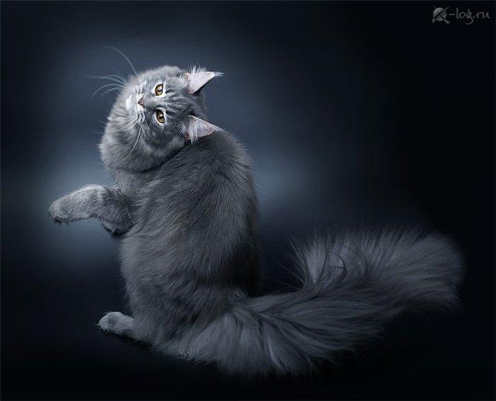 Дымчатая нежность от фотографа А.Соколовой