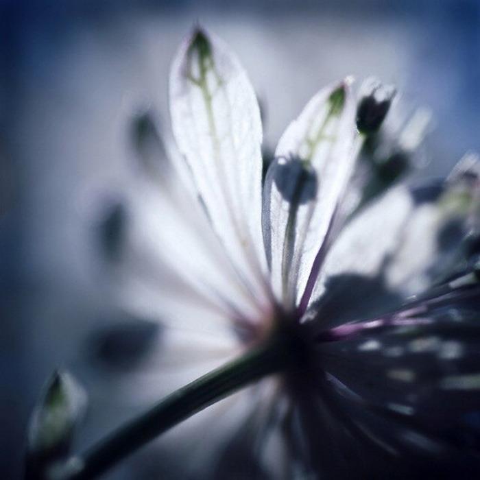 Нежная романтика от Marta Cernicka (700x700, 73Kb)