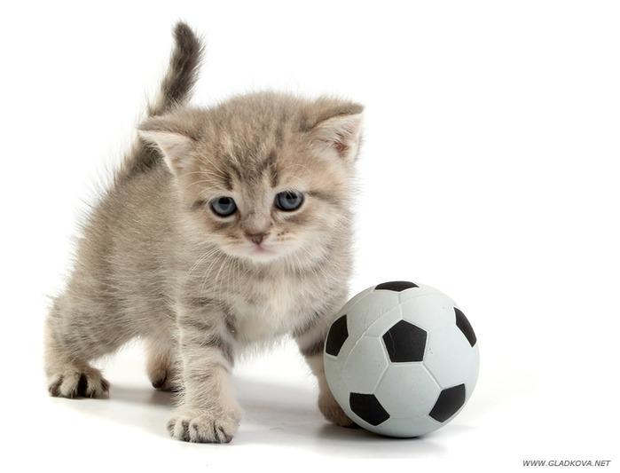 здесь картинки котенок с мячиком нельзя салаты