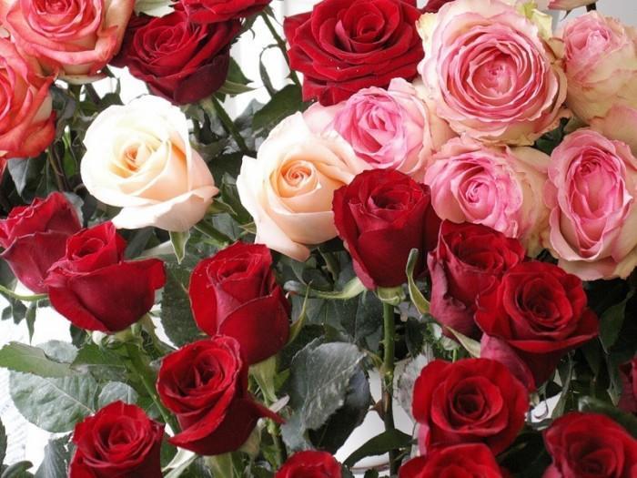 О празднике цветка розы