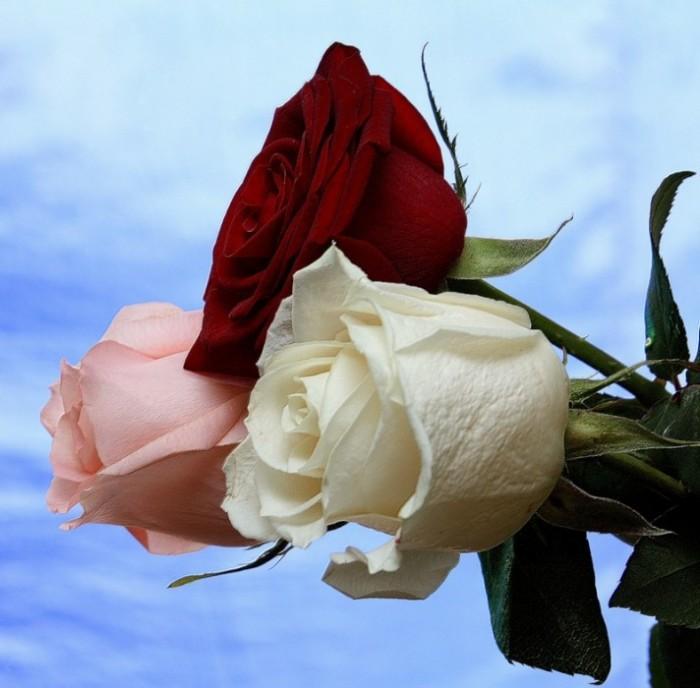 Открытки лучшему другу розы