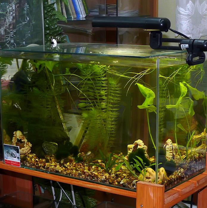 аквариумные хозяйства фото все ваши задумки