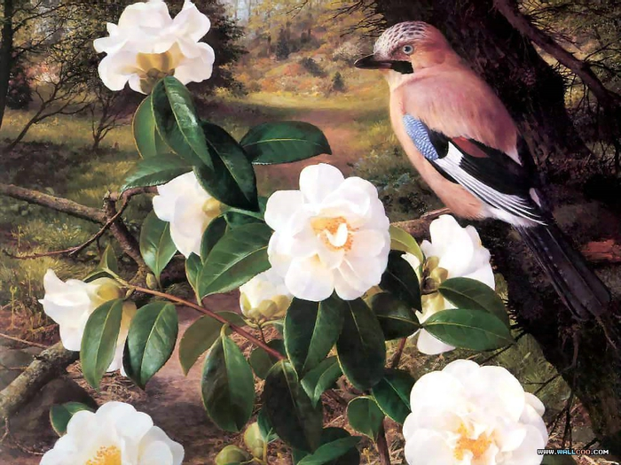 Рэймонд Бут: an artists garden csg007