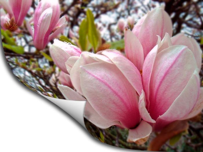http://img0.liveinternet.ru/images/attach/c/1/56/176/56176422_8.jpg