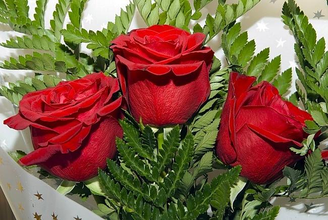 розы гале картинка можно