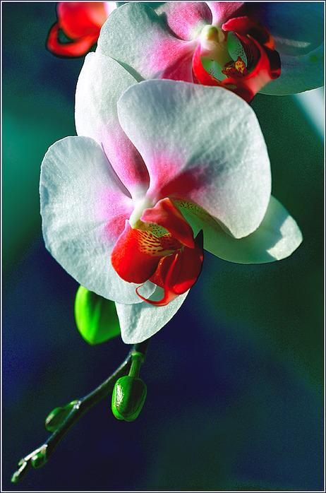 Орхидеи - это оригинальное растения, цветы.