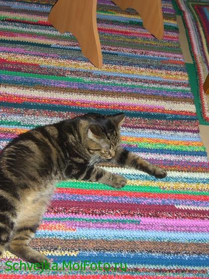 картинка коврика для кошки отца мужа