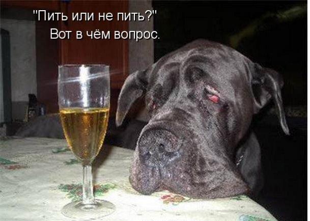 Открытка выпить хочу, православная благодарю тексты