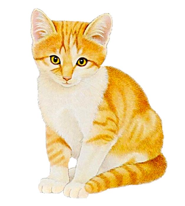 Новый год, котик картинки для детей на прозрачном фоне