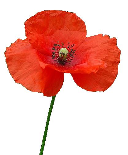 бутылка фото на прозрачной основе цветы маки заявку