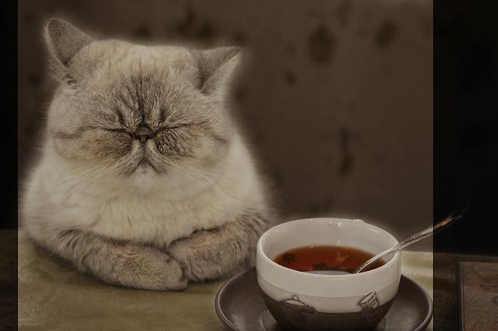 Смешная картинка про кота с чаем, открытка