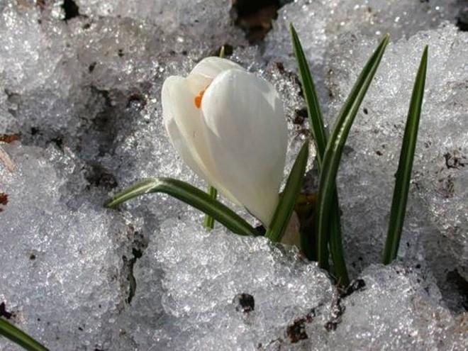 Где зима встречается с весной 660_660 (660x495, 100Kb)