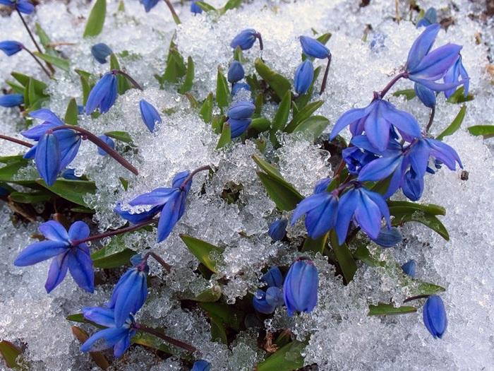 Где зима встречается с весной 582 (700x525, 191Kb)