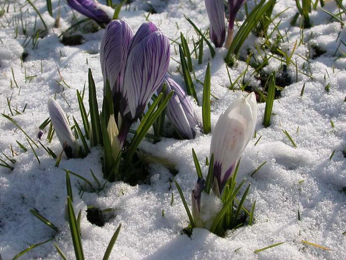 Где зима встречается с весной 184363 (700x525, 140Kb)