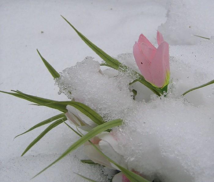 Где зима встречается с весной 1321206949845652 (700x595, 81Kb)