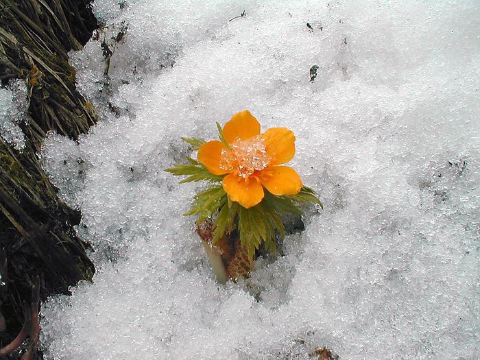 Где зима встречается с весной 7829_2 (700x525, 218Kb)